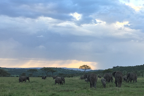 Photo of elephants in Africa